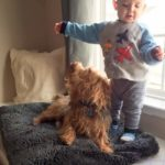10 Ways That Toddlers and Dogs are Similar